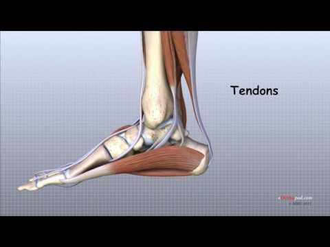ceea ce face rănirea articulațiilor piciorului