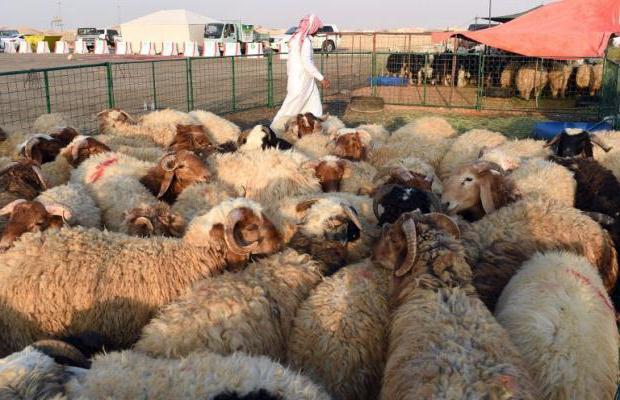 boala articulației oilor