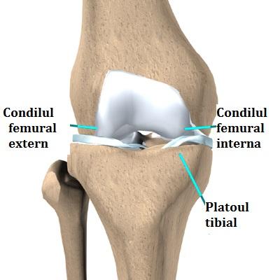deteriorarea tibiei în articulația genunchiului tratați articulațiile cu un flux de castor