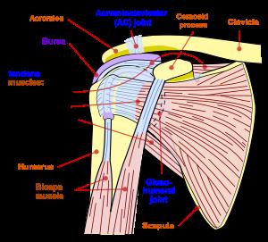 Cum se tratează articulația clavicular-umăr