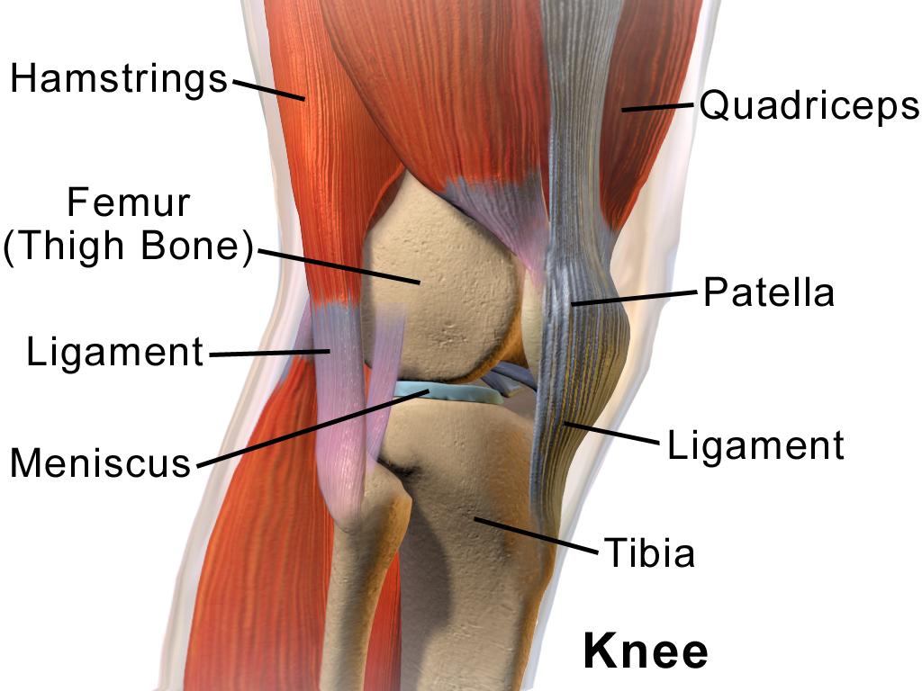 articulația genunchiului din față
