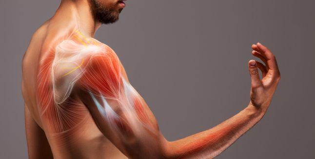 tratamentul articulațiilor și al spatelui muscular cum să restabiliți cartilajul cu artroza genunchiului