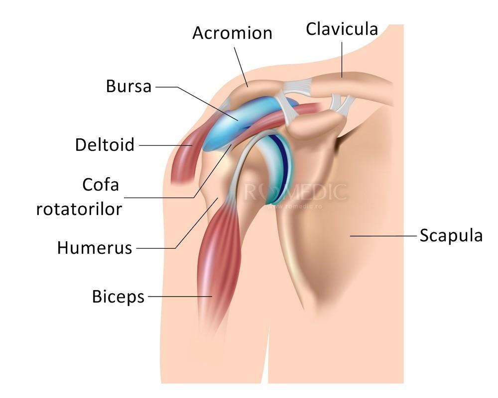 ligament lateral interior interior al articulației genunchiului dureri articulare ale mâinii drepte