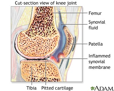 Caracteristicile membranei sinoviale normale