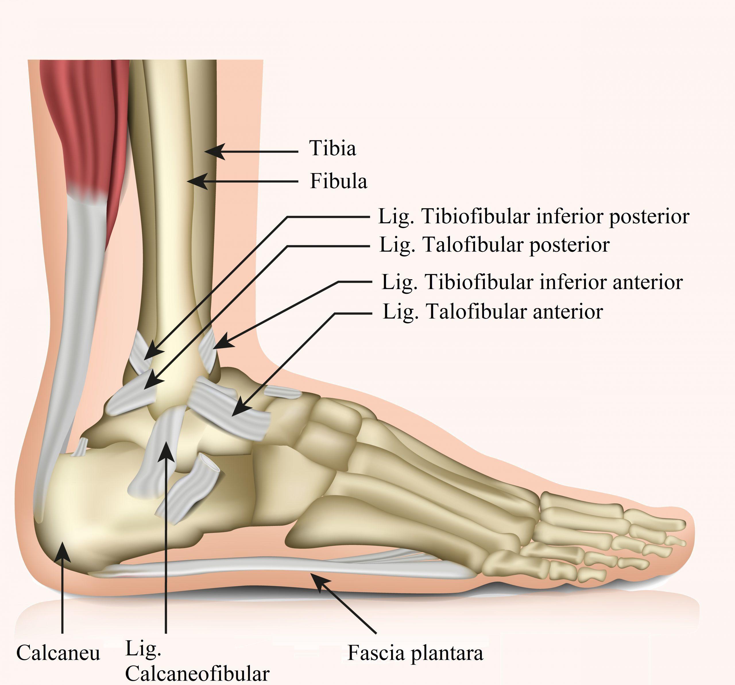 articulațiile de capră rănesc picioarele