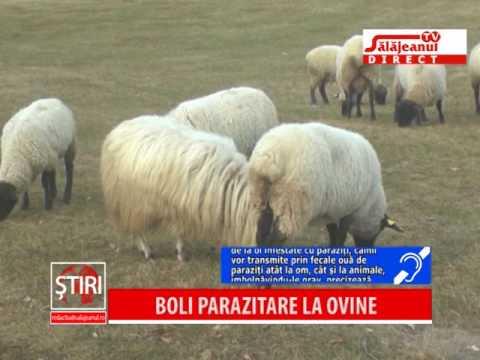 boli articulare la ovine)