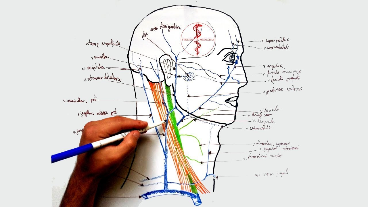 artroza arterelor de berbec