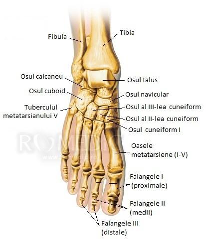durere acută în articulațiile piciorului)