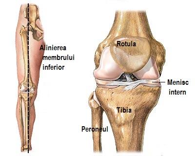 articulația genunchiului piciorului