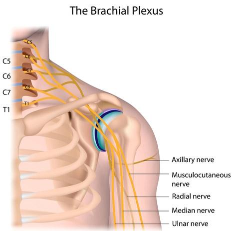 nervul dureros în articulația umărului