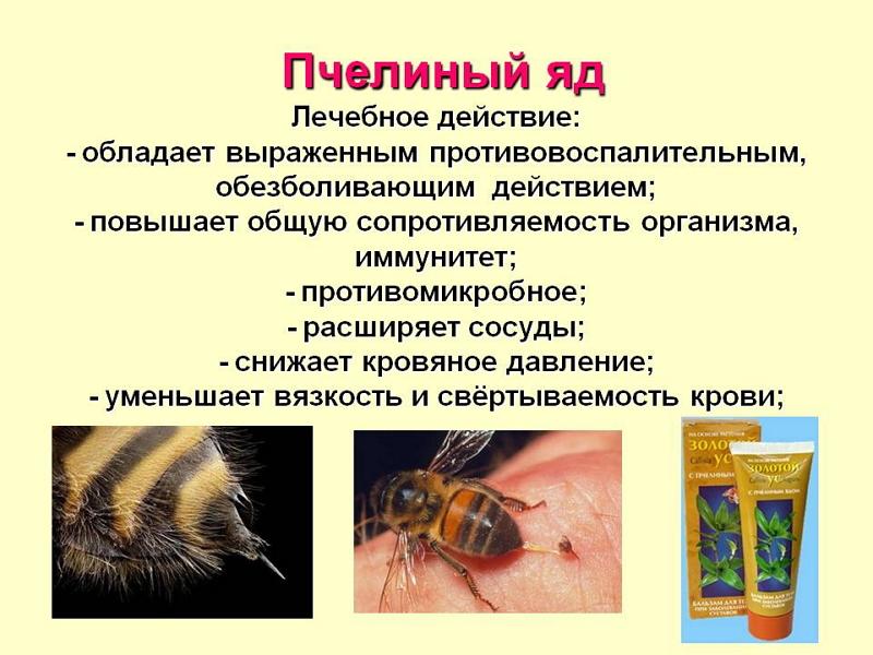 Tratamentul cu venin de albină, miracol sau otravă: explicaţia specialiştilor | nightpizza.ro