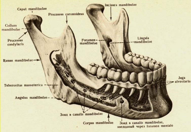 clic și durere în articulația temporomandibulară