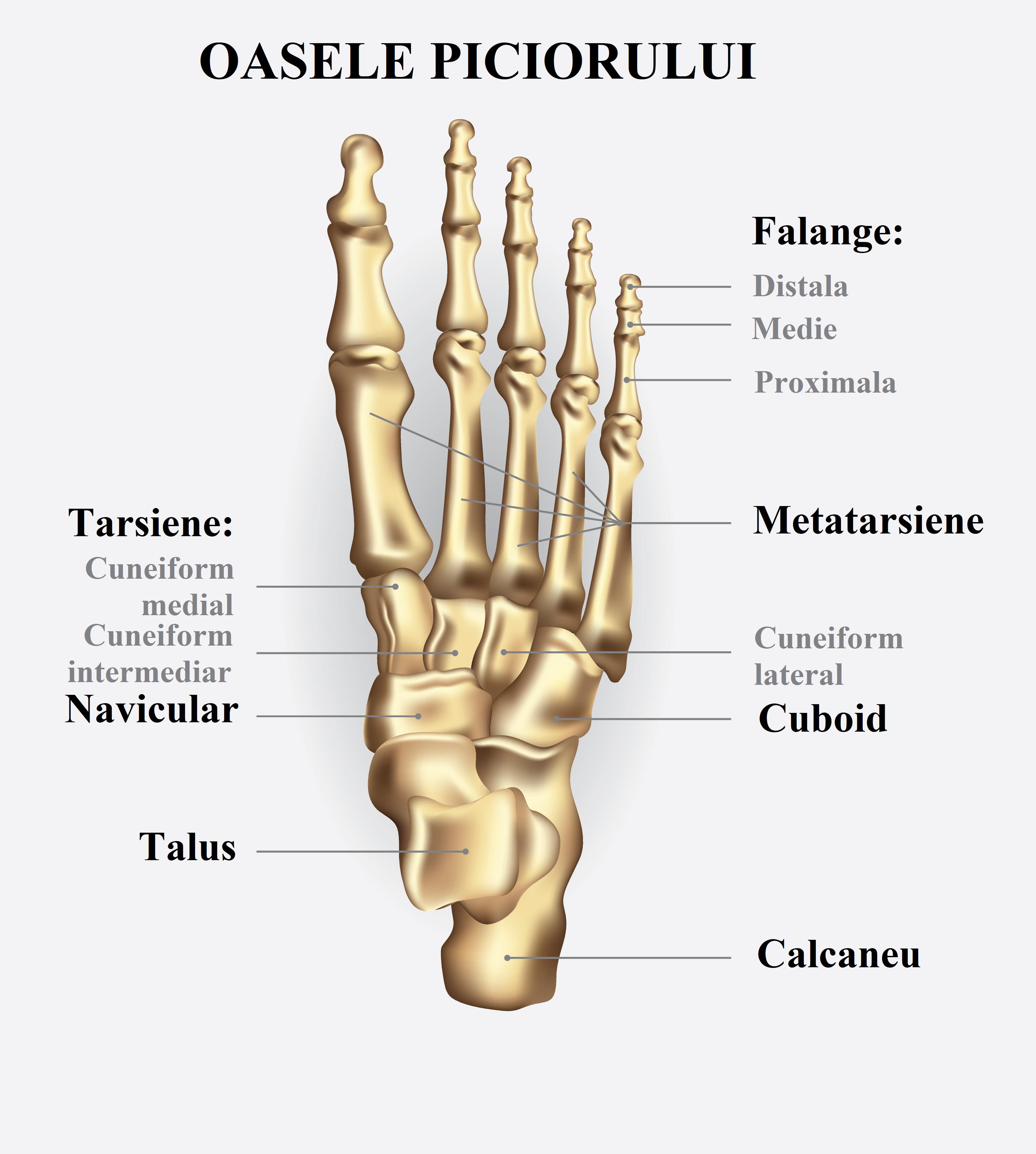 nume ale bolii articulare a picioarelor