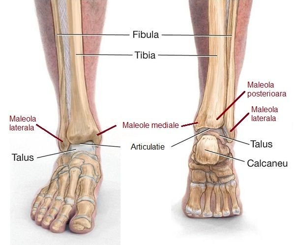 Este tratată artrita articulației gleznei. Problemele Gleznei – Cauze si Tratament