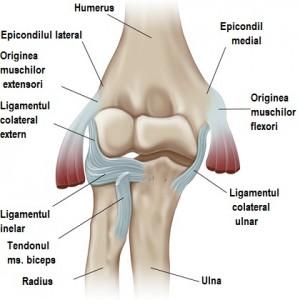 durere humerală în articulația cotului)