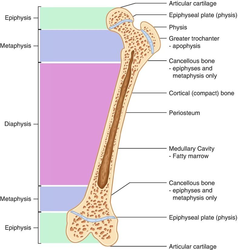 Muștar cu artroză a genunchiului. Ich bin Neukunde