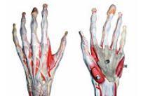 articulația fără nume a mâinii drepte doare