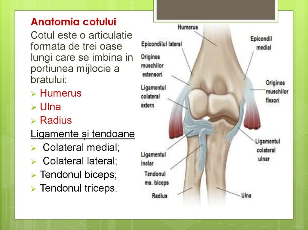 articulațiile organice doare tratamentul homeopatic al genunchiului