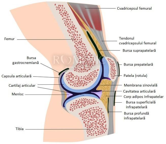 durere în articulația genunchiului în mișcare