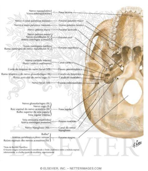 artrita articulației occipitale