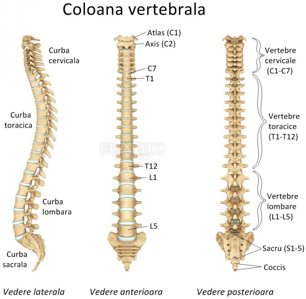 Cervicalgie - Wikipedia
