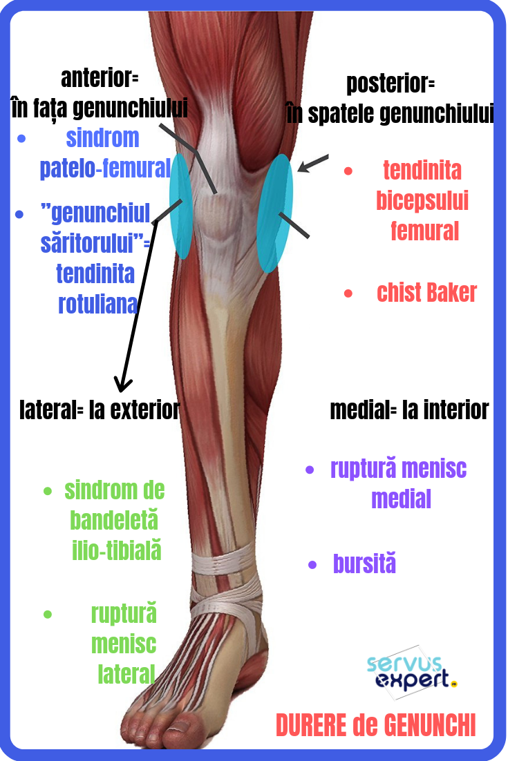 dureri de genunchi în interior