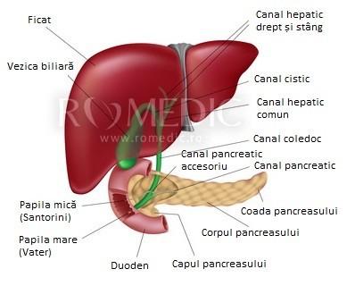 articulații adulmite ale ficatului mărit