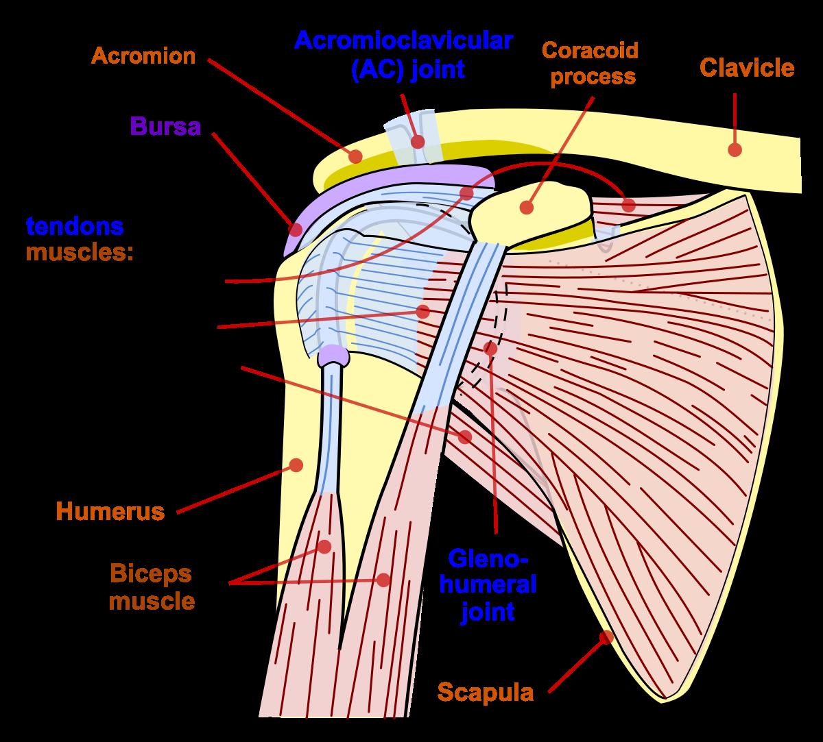leziuni ale sacului articulației articulației umărului)