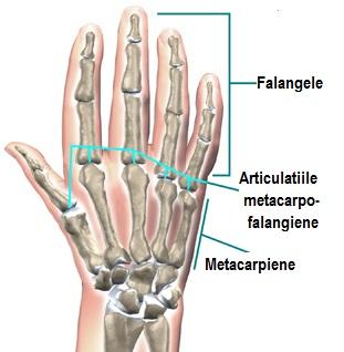 articulații metacarpofalangiene ale durerii mâinii