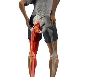 articulațiile și mușchii feselor doare