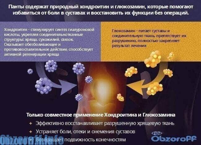 Recenzii cremă articulară artropantă