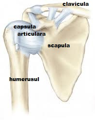 Articulațiile încheieturii și umărului - Boli ale articulațiilor umărului și metode de tratament