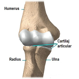punct dureri pe articulația cotului)