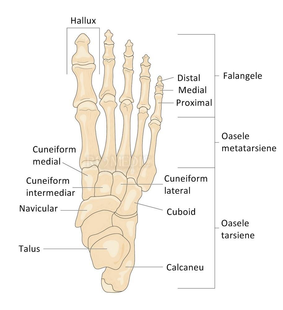 durere în articulațiile metatarsiene ale picioarelor)