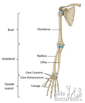 Cauzele frecvente ale durerii la nivelul braţelor | Panadol, dureri musculare în gât și braț