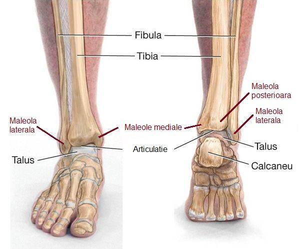 artroza în articulația gleznei