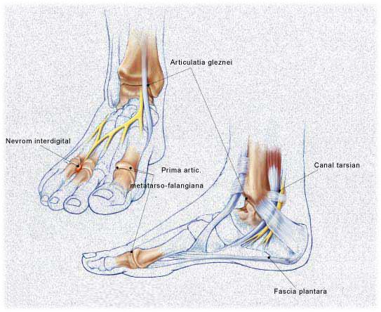 durere în articulația gleznă-picior