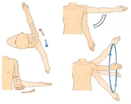 mușchii articulației umărului)