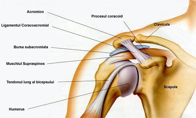 IRM imaginea umărului (secțiunea axială)