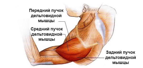cum să consolidezi articulația umărului după o accidentare