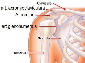Dă clic pe articulația umărului și doare - Durerile Umarului – Cauze si tratament   Virgil Pruteanu
