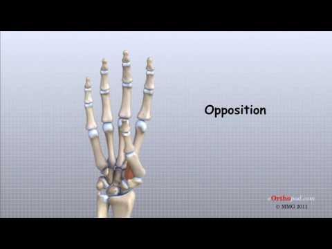 Cauze, simptome și prim ajutor pentru dislocarea încheieturii mâinii - Rănire