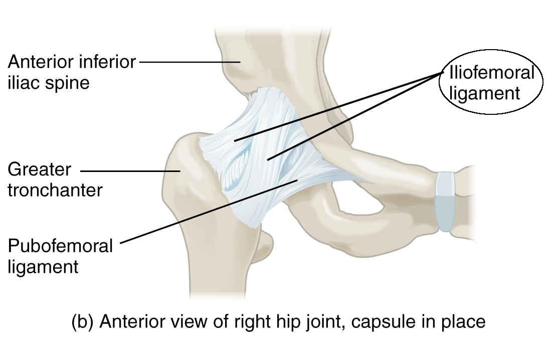 articulațiile și tendoanele mâinilor doare consult de tratament comun