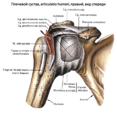 deteriorarea manșetei rotative a articulației umărului drept