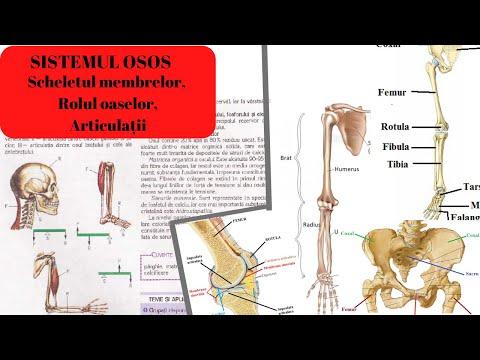 preparate pentru articulații intramuscular