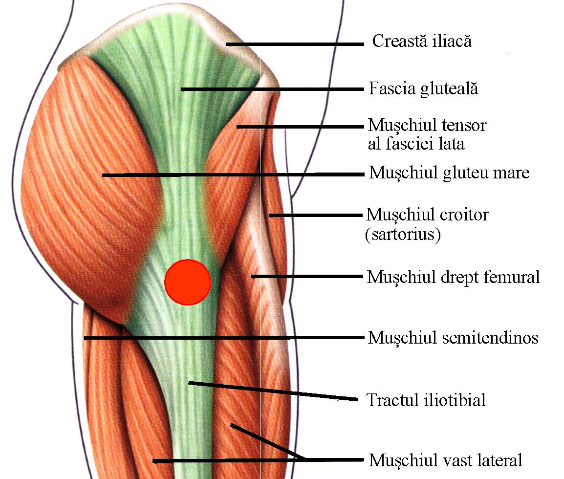 durere în timpul mersului articulației șoldului stâng)