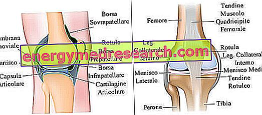 Durere la nivelul coapsei până la genunchi