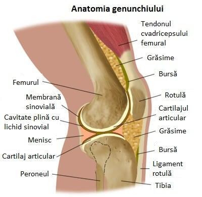 durere la vârful genunchiului