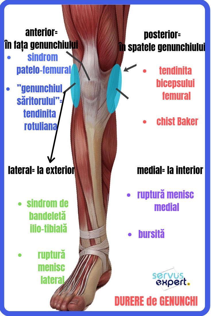 o durere a articulației picioarelor sub genunchi