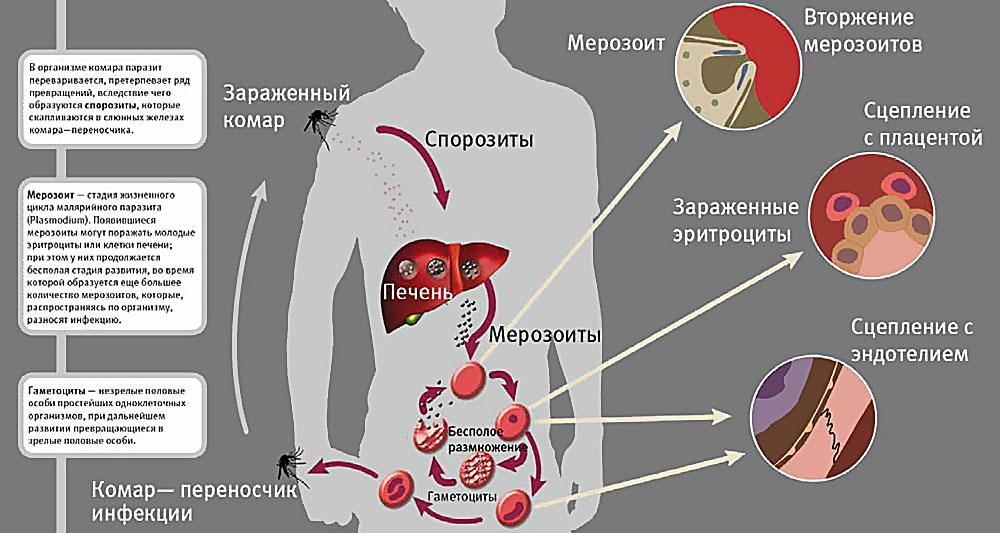 tratament comun cu delagil)